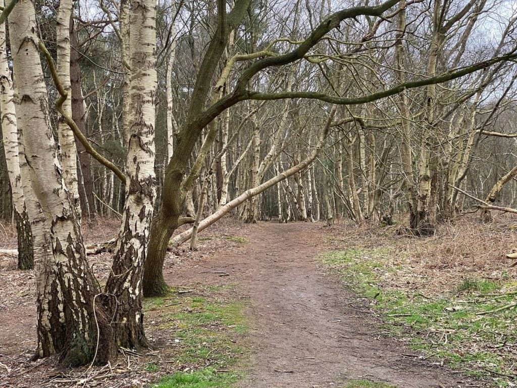 broadland country park path and trees