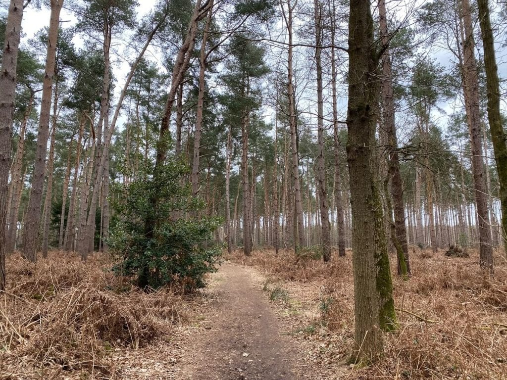 path and trees in broadland country park