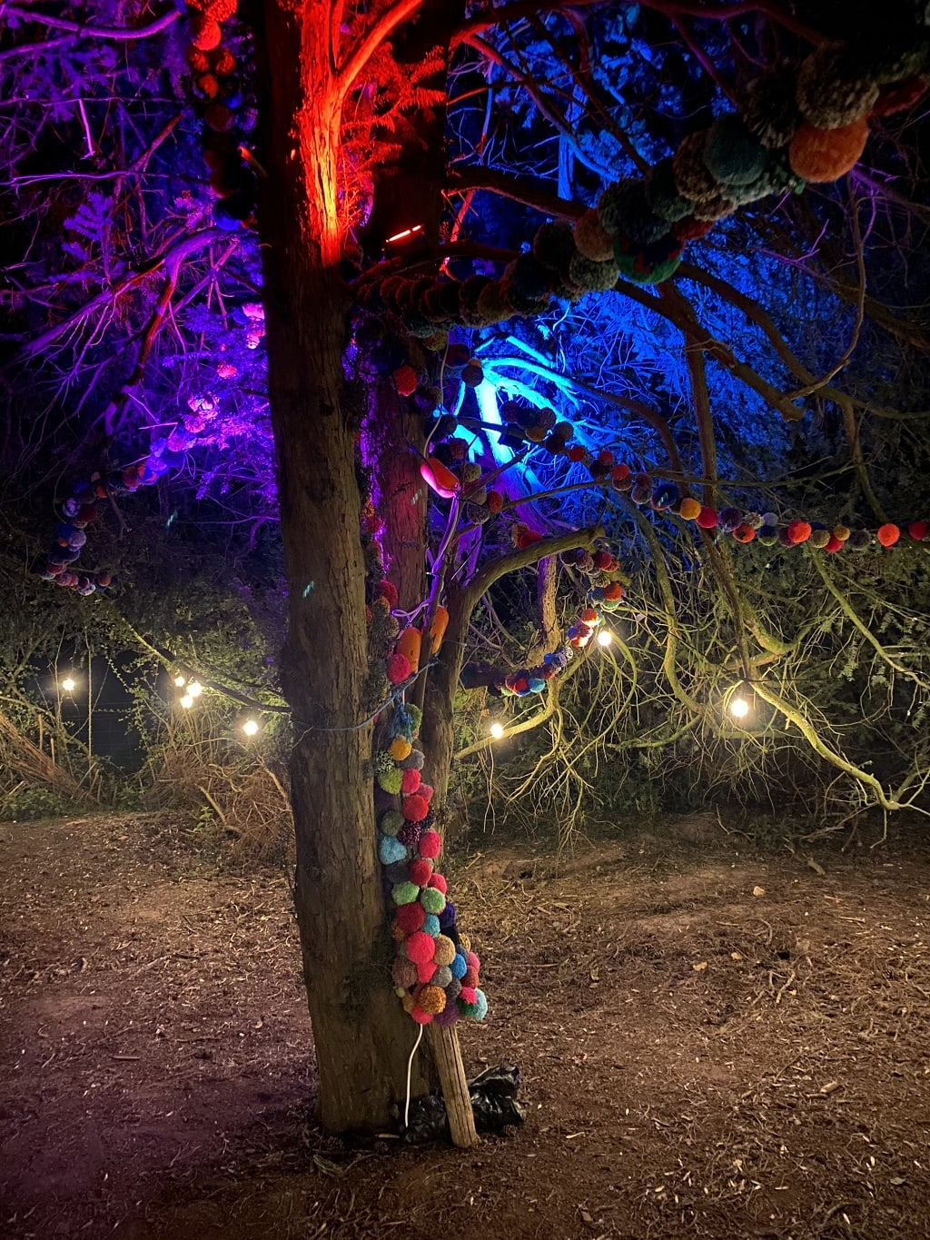 colourful tree at woodland lumiere
