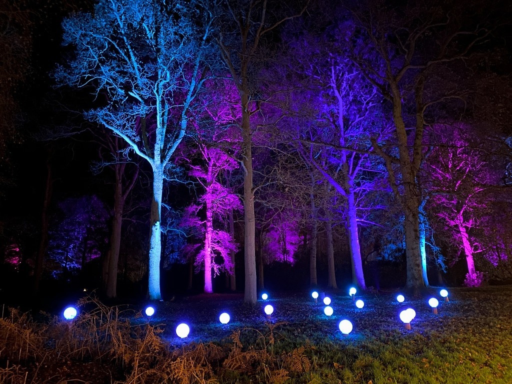 trees lit up in different colours at Sandringham luminate