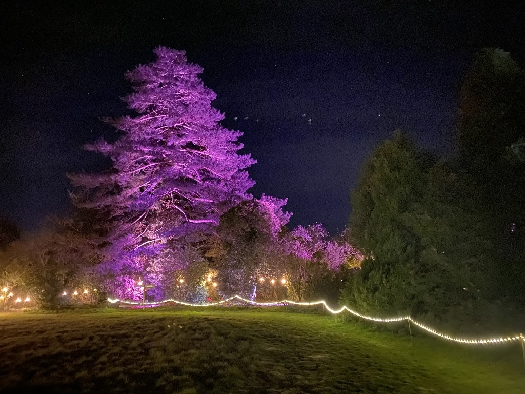 tree at raveningham woodland lumiere
