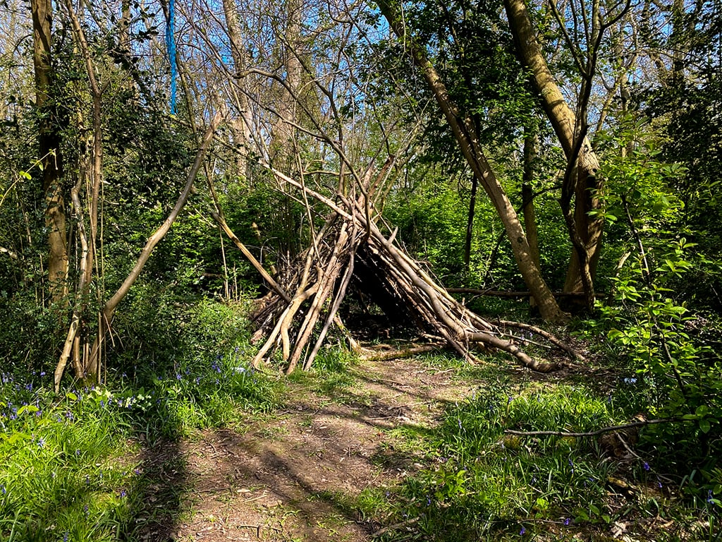 den and trees in wayland wood