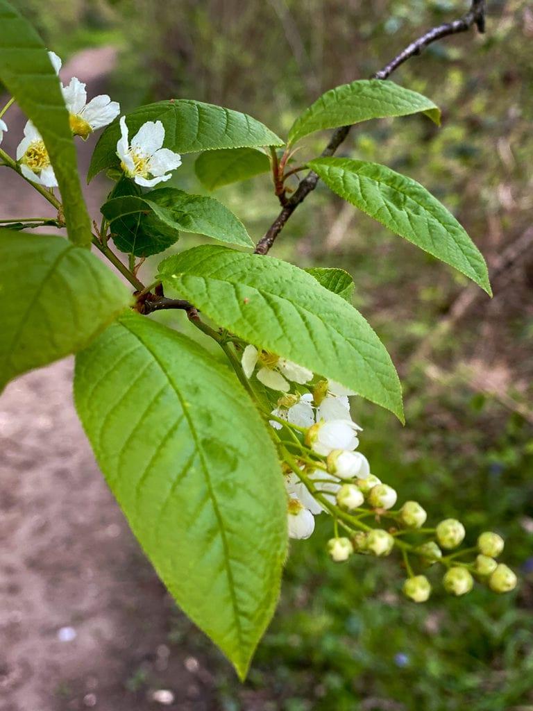 flower in wayland wood
