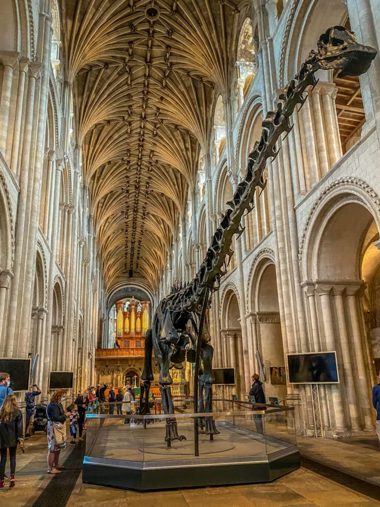 dippy on tour at norwich cathedral