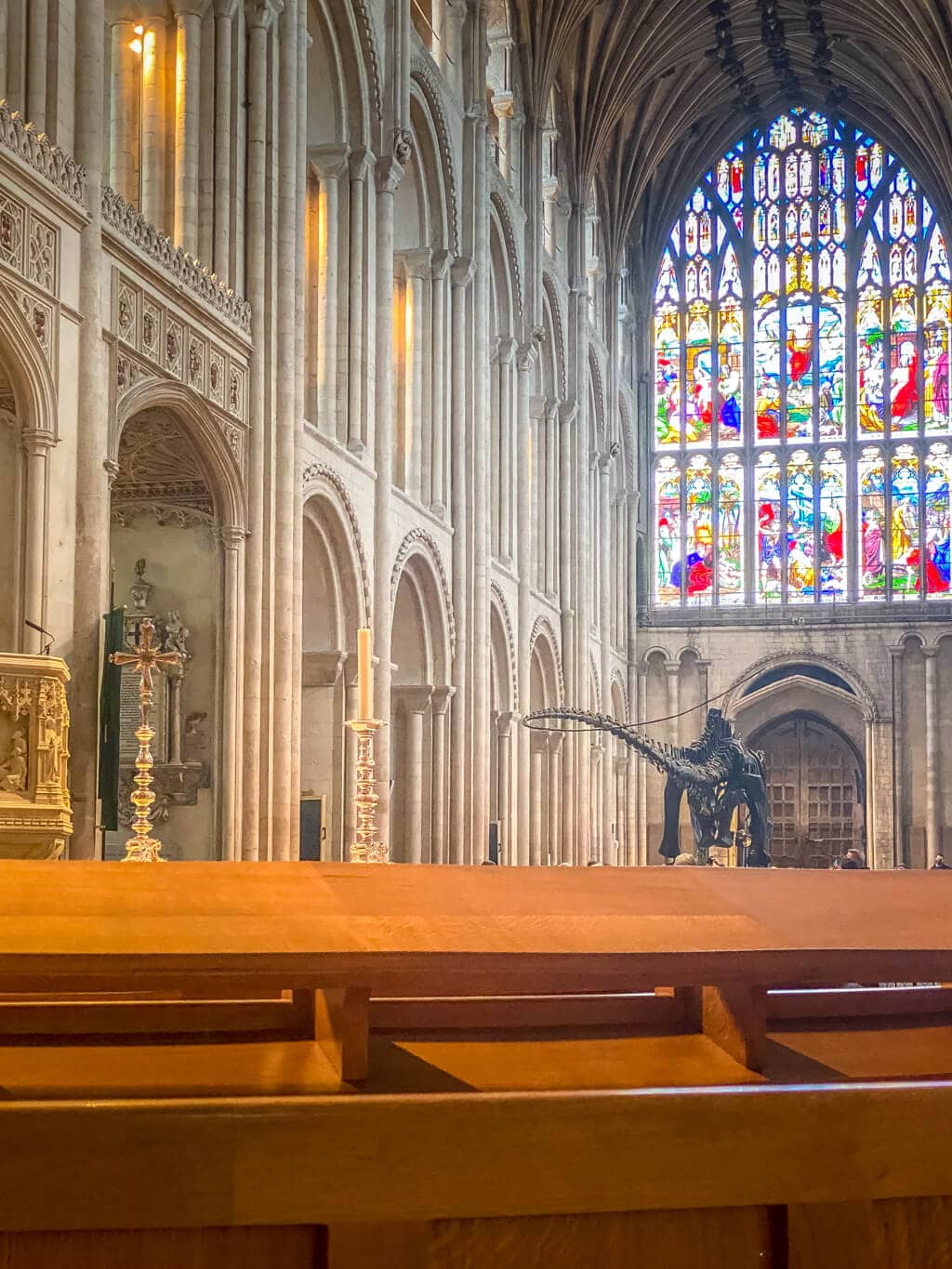 view of dippy in norwich cathedral from the back