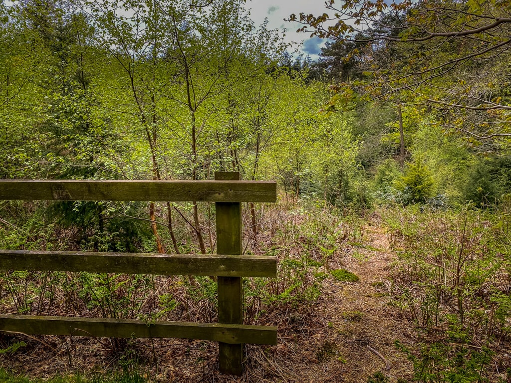 part of a fence with vegetation around it in pretty corner woods